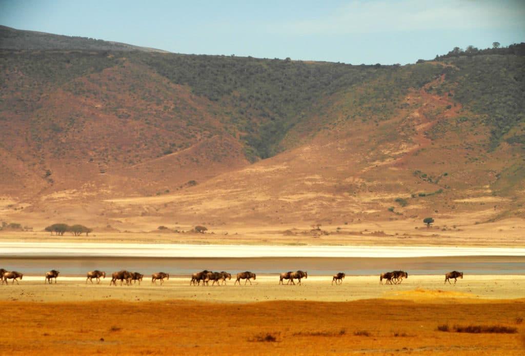 Le cratère du Ngorongoro est une vraie arche de Noé.