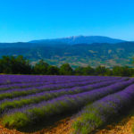 Les champs de lavande de la Drôme Provençale