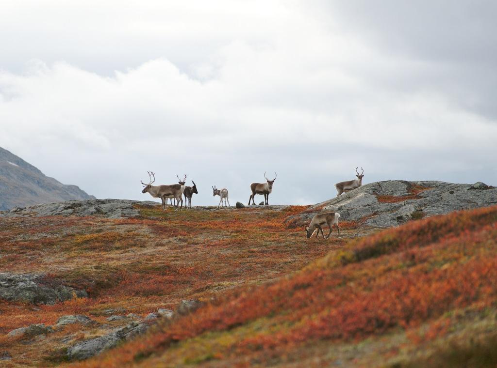 Sur le Kungsleden Trial en Suède, blog voyage Novo-Monde
