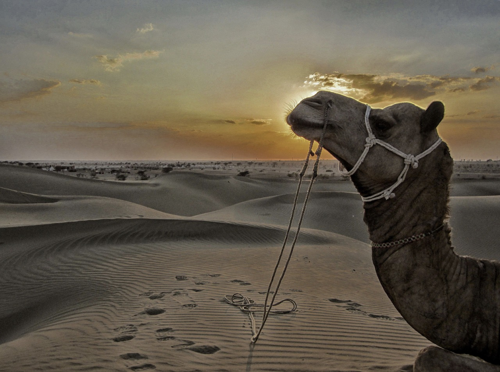Une petite balade dans le désert du Thar au Rajasthan