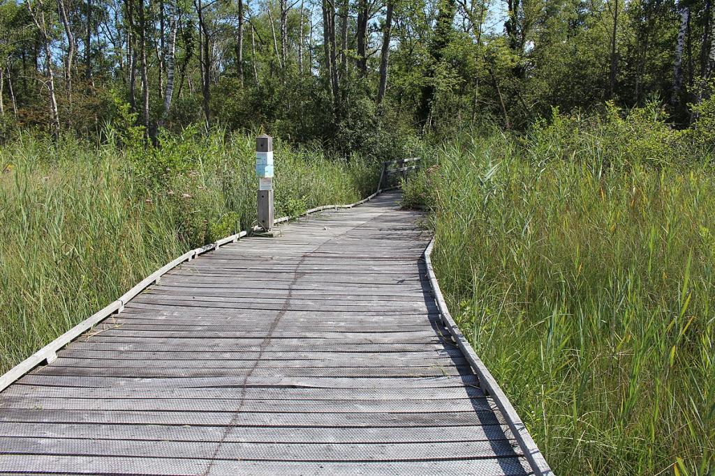 Le sentier sur pilotis du marais de Lavours