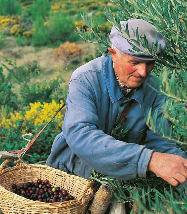 Que voir / Que faire dans la région d'Avignon #7 : Mouriès, son huile d'olive et son moulin