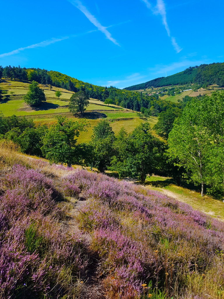 La balade du Boursan à Nozières parmi les 3 promenades incontournables pour découvrir la région de Lamastre à pied