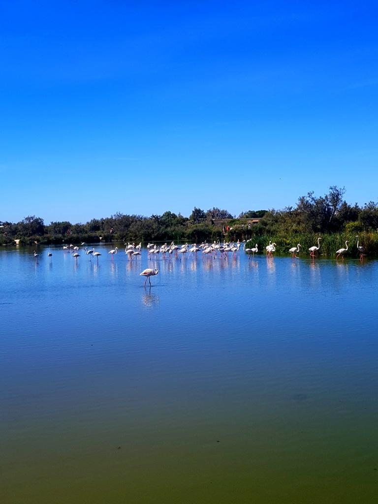 Parc ornithologie du Pont-de-Gau (Camargue) en france
