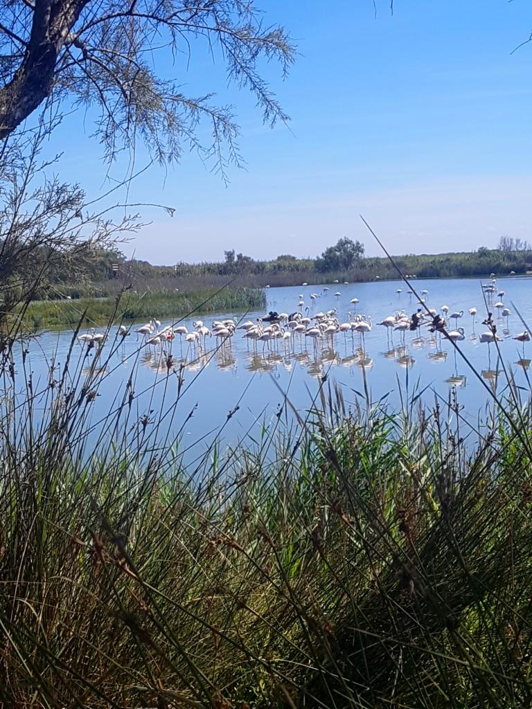 Parc ornithologie du Pont-de-Gau (Camargue) dans la région d'Avignon